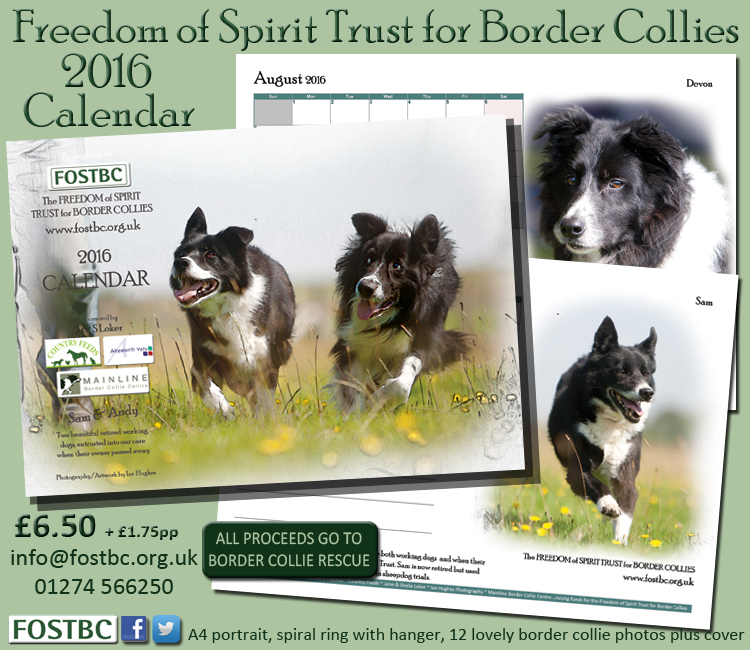 Mainline Border Collie Centre